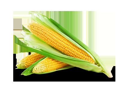<h1>Seguro Agrícola<h1>